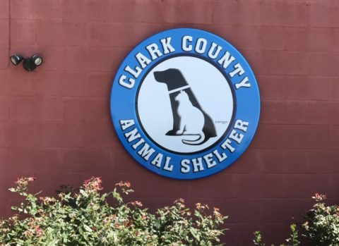 Clark County Animal Shelter, Rescue Veterinary Disinfectants, AHP, Veterinary Practice, shelter, dog, cat