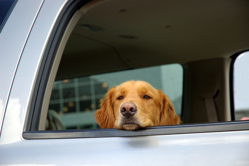 Leaving Dogs in Cars in the Summer: We Debunk 3 Common Myths - Rescue